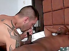gay gay couple oral sex anal sex blowjob