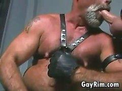 bears gay blowjob gay gays gay
