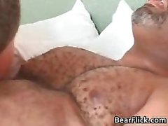 bear black blowjob gay hairy