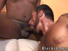 gay big cocks blowjobs gay porn