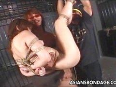 asiático bdsm bdsm porn videos