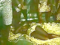 ebony reality african