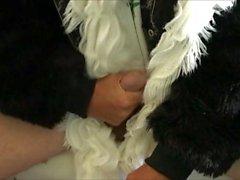 Fetishism of the Fur of Black Bear