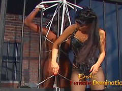 big butts femdom mistress spanking stockings